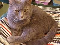 Rambler's story Rambler, a big grey boy, was rescued as