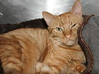 Rambo's story Rambo is a petite guy at just 7 lbs., but