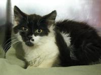 Rambo's story Rambo is a sweet kitten looking for a