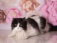 Rambo's story RAMBO WAS NEUTERED PRIOR TO ARRIVING AT
