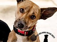 Rambo's story Adoption Information:  Our dog and