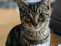 My story Ramona is a beautiful 6-month old kitten with