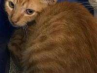 Ramsey's story C1808042 Ramsey is a young kitten who is