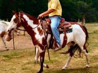 CC Miss Sonnyskip. is an 11 year old tri paint mare. CC