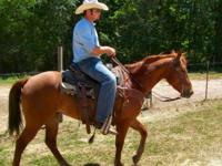 "Play Red Rally"" Reg AQHA sorrel gelding, with a"