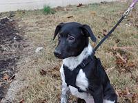 Rand's story Rand and his siblings were saved from a