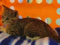 Randall's story Hi! My name is Randall I was brought to
