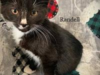 My story Randell and his twin brother Rex came to us at