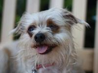 Randolph - MEET ME @ PETCO 8/18's story This dog is in