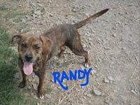 RANDY's story This very cute personable small guy is
