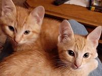 My story Randy and Rusty are bonded 11 week old