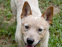 Ranger's story Please contact Adoptions
