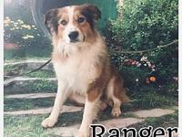 Ranger's story Name: Ranger Breed: Aussie Mix D.O.B: