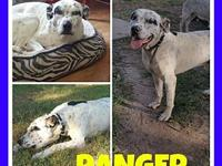 Ranger's story Ranger was a terribly starved stray in a