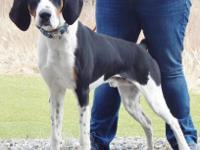Hi there, my name is Ranger! I am a Foxhound mix, and I