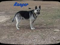 Ranger is a super sweet  approx. 1 yr. german