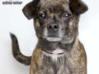 Ranger is about 9 years old.  YWAC Adoptions include: