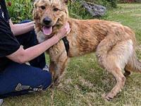 Ranger's story Ranger is in need of a foster who is