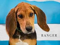 Ranger's story Hey! Im Ranger, I came to LKNH from