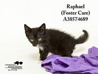 Raphael (In a Foster Home)'s story All cats in the