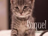 Hi, Im Raquel - and my nickname is Rocky! I am a sweet,
