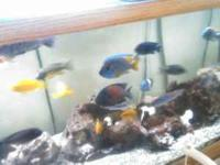 I have a 125 gallon fish tank full of rare african