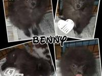Name: Benny Color: blue with white Dob: 5/18/15 Status: