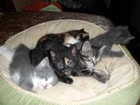 Please call cell number if interested  Gray/ White-