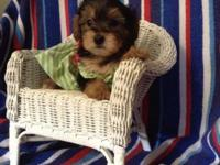 I have four Yorkie pups that are quite teeny small,