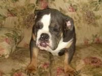 She was born on Feb 8th and she is AKC REGISTERED with