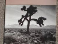 Rare official program from U2's 1987 Joshua Tree Tour
