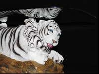 Beautiful White Tiger Coffee Tablethe Table Is