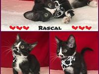 Rascal's story Rascal is sweet and affectionate little