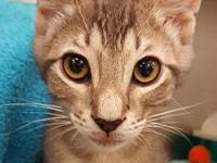 My story I am a male domestic short haired kitten. I am