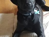 My story RASCAL is a 6-month-old neutered male black