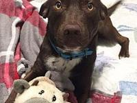 Rascal's story Cute Rascal is looking for a home! He's