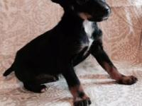 This sweet little guy is looking for a new home. black