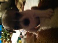 We have rat terrier male furbaby looking for a forever