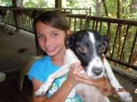 Rat Terrier - Mama Rat Terrier Mix - Small - Adult -