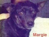 Rat Terrier - Margie - Small - Adult - Female - Dog