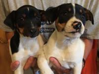 These cute pups are from a litter of 5 puppies. There