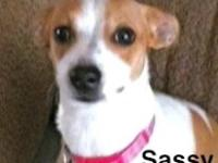 Rat Terrier - Sallie - Small - Adult - Female - Dog