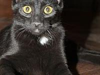 Raven's story Raven is a 4 month old happy kitten with