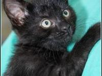 RAVEN's story $97.50 FEE INCLUDES: neutering/spaying,