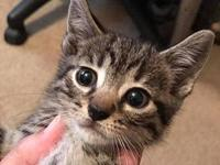 Raven's story Raven is a young female kitten ready for