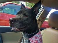 Raven's story Raven is between 4-6 years old, spayed,