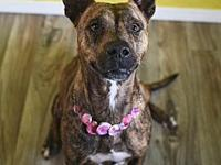 Ravenna's story Ravenna is a 3-year-old terrier mix
