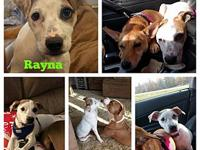 Ray's story Rayna, known as Ray is the sweetest pup!