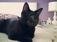 Ray Ray's story Meet Ray Ray our latest rescue black