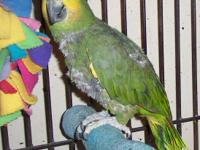 Raycliff was rescued from a bird research facility and